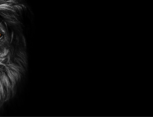 Majestic – Leo New Moon